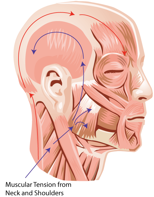 Temporomandibular Joint Pain Tmj Berwick Acupuncture